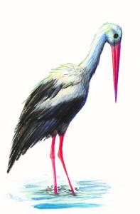 Barza, ilustratie de George Romila