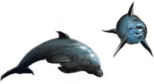 Delfinul - ilustratie de George Romila