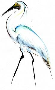 Egreta-ilustratie-de-George-Romila