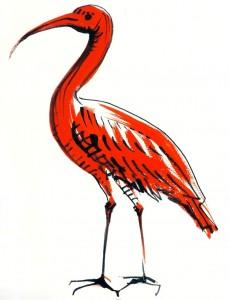 Ibis - ilustratie de George Romila
