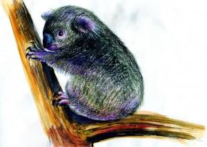 Koala - ilustratie de George Romila