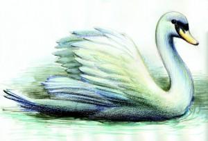 Lucian-Strochi-Lebada-ilustratie-de-George-Romila