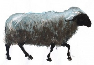 Oaia - ilustratie de George Romila