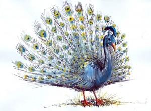 Paunul - ilustratie de George Romila