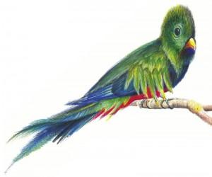Quetzalul - ilustratie de George Romila
