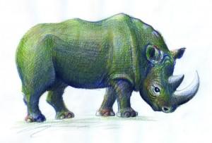 Rinocerul - ilustratie de George Romila