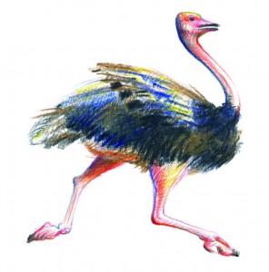 Strutul - ilustratie de George Romila