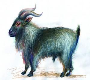 Tapul - ilustratie de George Romila