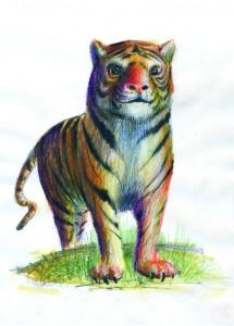 Tigrul - ilustratie de George Romila