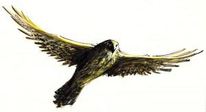 ULIUL - ilustratie de George Romila