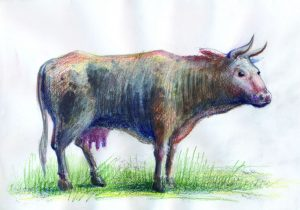 VACA - ilustratie de George Romila